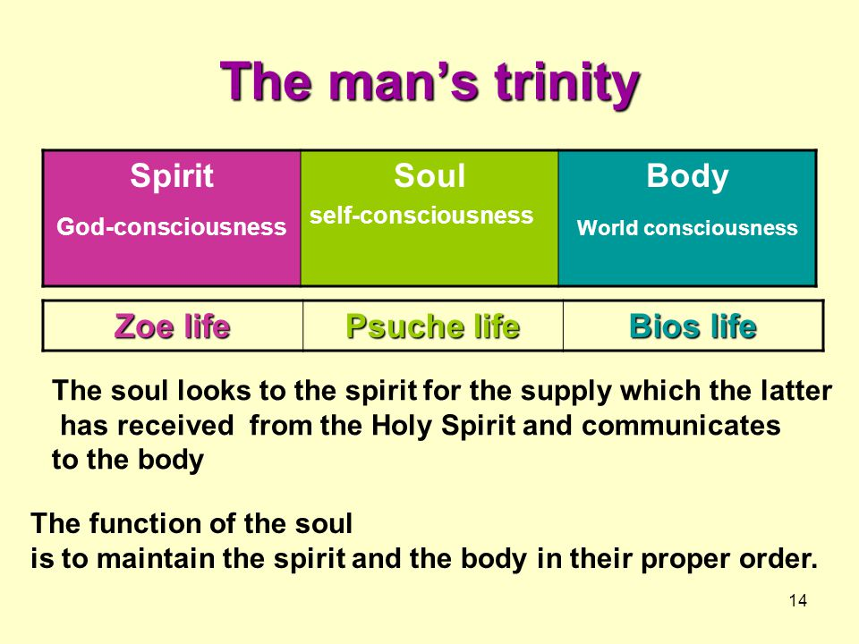 14 The man's trinity Spirit God-consciousness Soul self-consciousness Body World consciousness The function of the soul is to maintain the spirit and the body in their proper order.