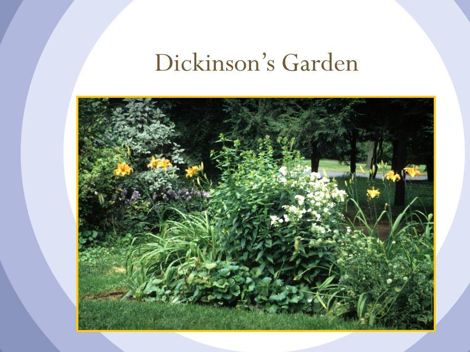 Dickinson's Garden