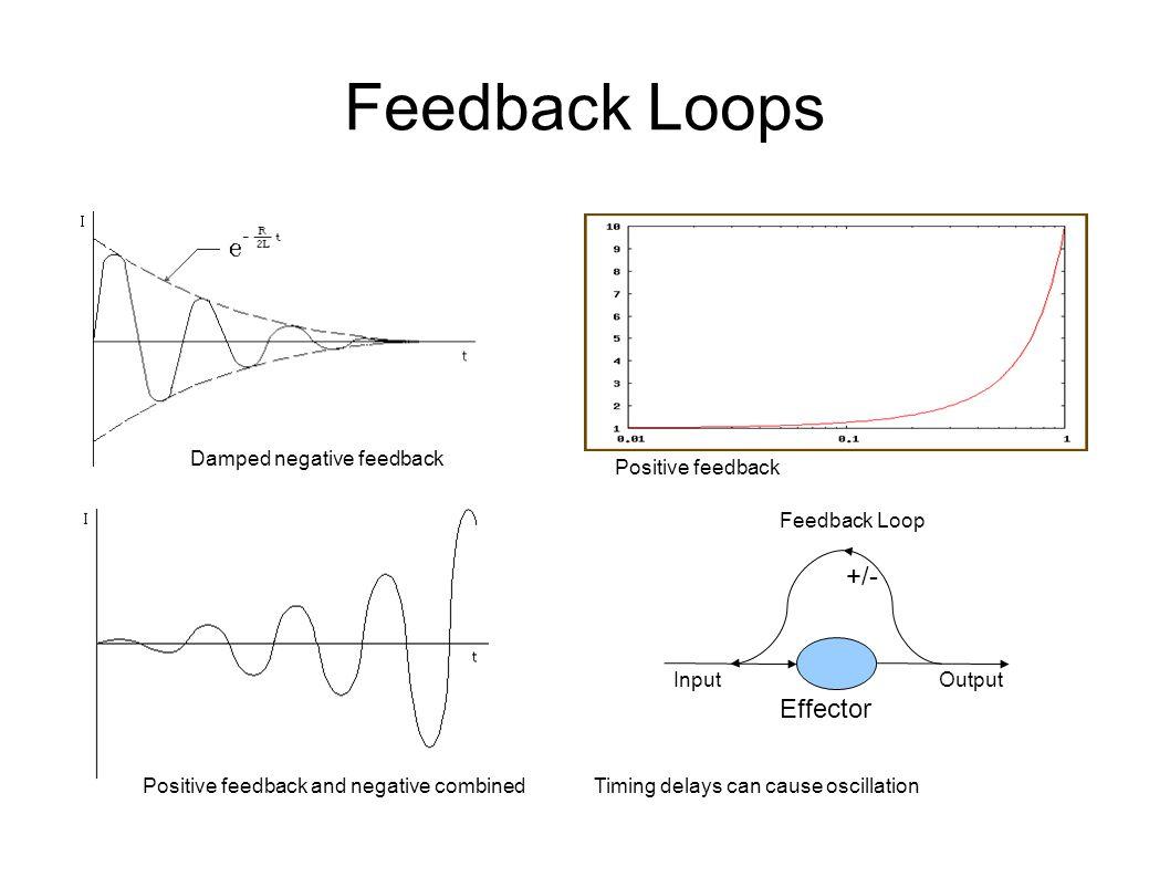 Feedback Loops +/- InputOutput Effector Damped negative feedback Positive feedback Positive feedback and negative combined Feedback Loop Timing delays can cause oscillation