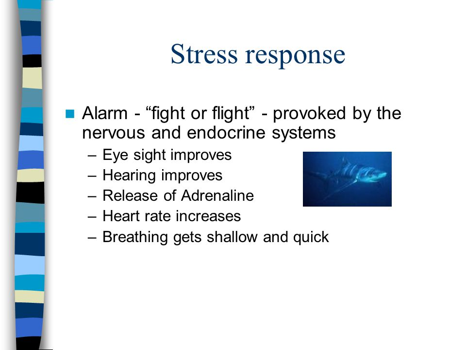 Stress Anything that causes a stress response.
