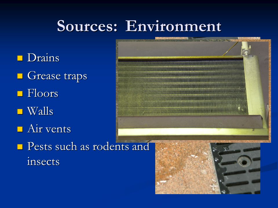 Sources: Environment Drains Drains Grease traps Grease traps Floors Floors Walls Walls Air vents Air vents Pests such as rodents and insects Pests suc