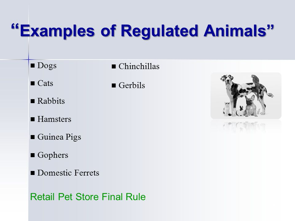 14 Examples of Regulated Animals Dogs Cats Rabbits Hamsters Guinea Pigs Gophers Domestic Ferrets Chinchillas Gerbils Retail Pet Store Final Rule