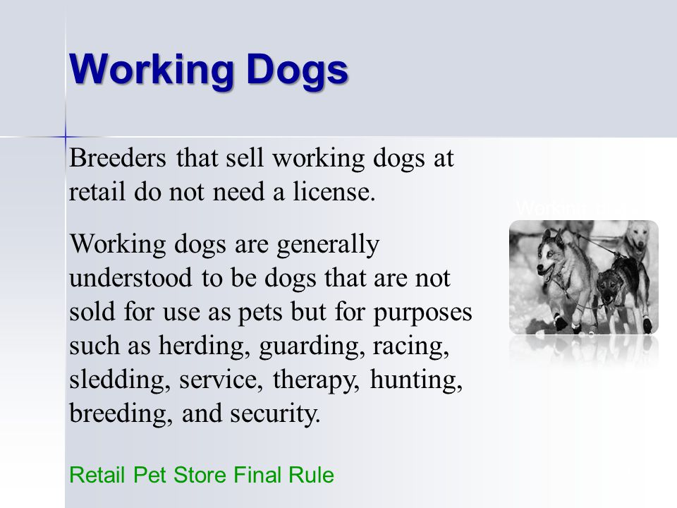17 Working dogs = dogs with full time jobs.