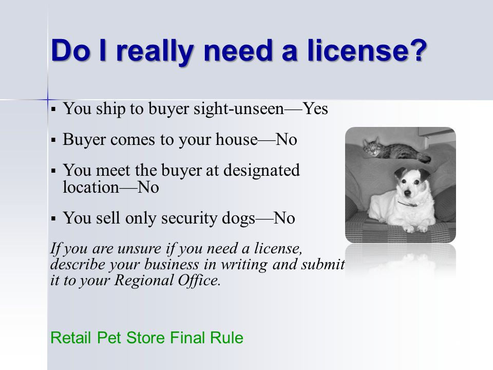 19  You ship to buyer sight-unseen—Yes  Buyer comes to your house—No  You meet the buyer at designated location—No  You sell only security dogs—No If you are unsure if you need a license, describe your business in writing and submit it to your Regional Office.