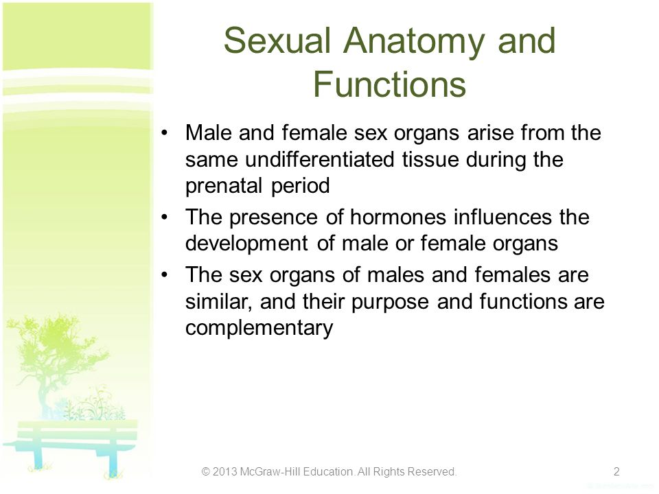 Sexual Anatomy and Functions Male and female sex organs arise from the same undifferentiated tissue during the prenatal period The presence of hormone
