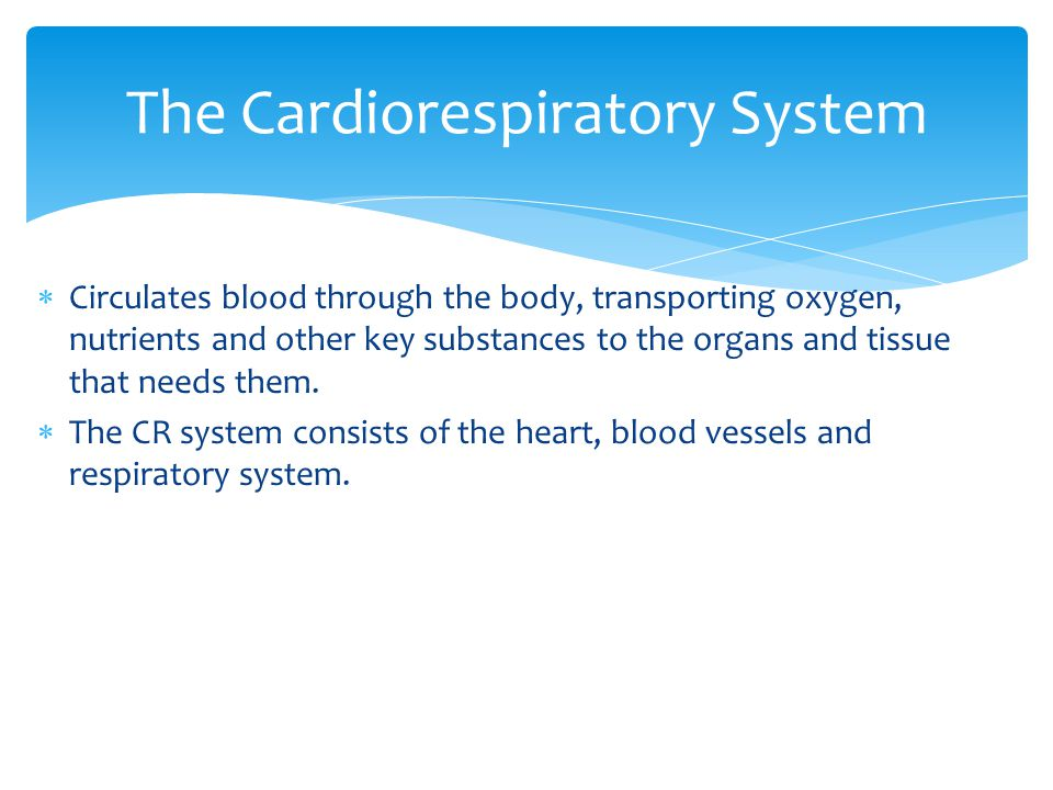  Circulates blood through the body, transporting oxygen, nutrients and other key substances to the organs and tissue that needs them.  The CR system