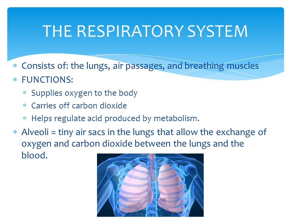  Consists of: the lungs, air passages, and breathing muscles  FUNCTIONS:  Supplies oxygen to the body  Carries off carbon dioxide  Helps regulate