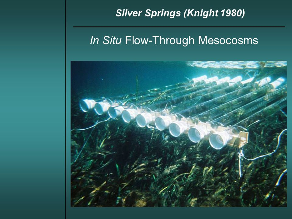 In Situ Flow-Through Mesocosms Silver Springs (Knight 1980)
