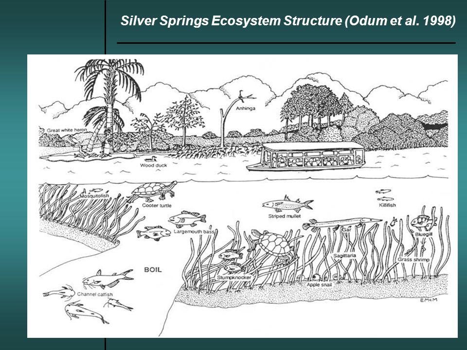 Silver Springs Ecosystem Structure (Odum et al. 1998)