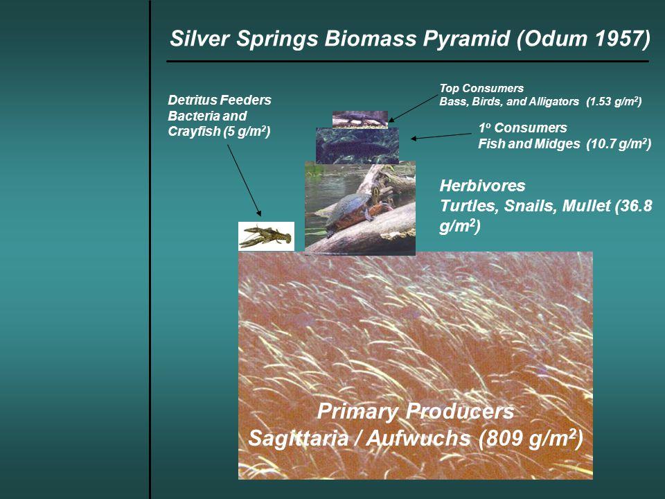 Upstream/Downstream Oxygen Change Method (1952-55) Silver Springs Ecosystem Function (Odum 1957)