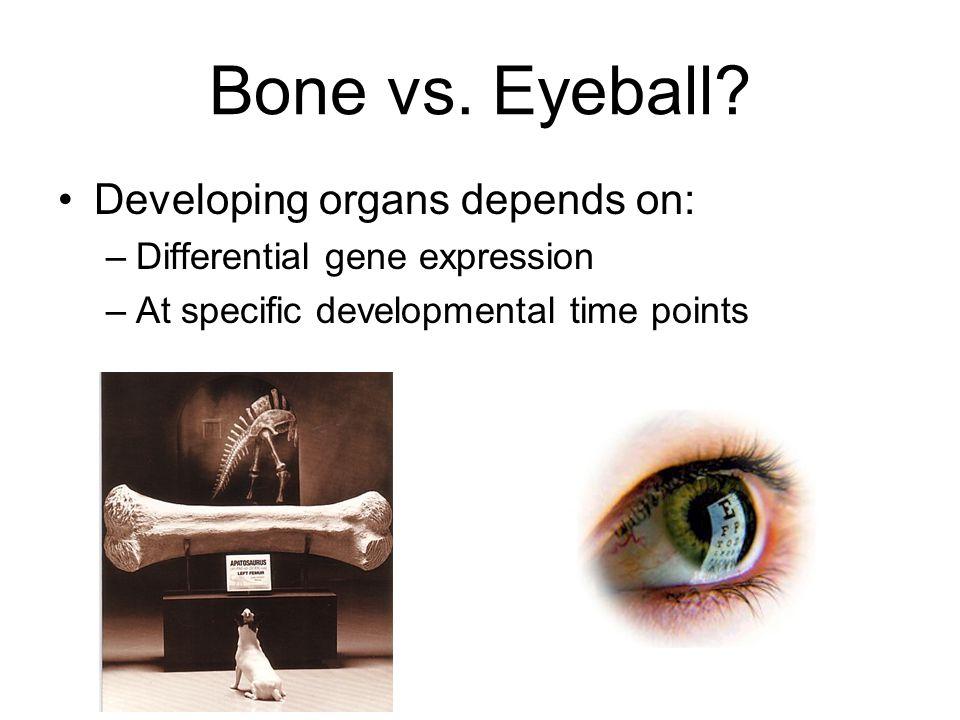 Bone vs. Eyeball.