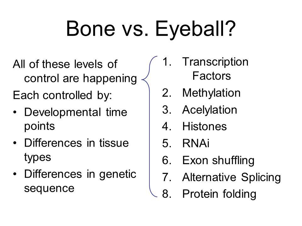 Bone vs. Eyeball? 1.Transcription Factors 2.Methylation 3.Acelylation 4.Histones 5.RNAi 6.Exon shuffling 7.Alternative Splicing 8.Protein folding All