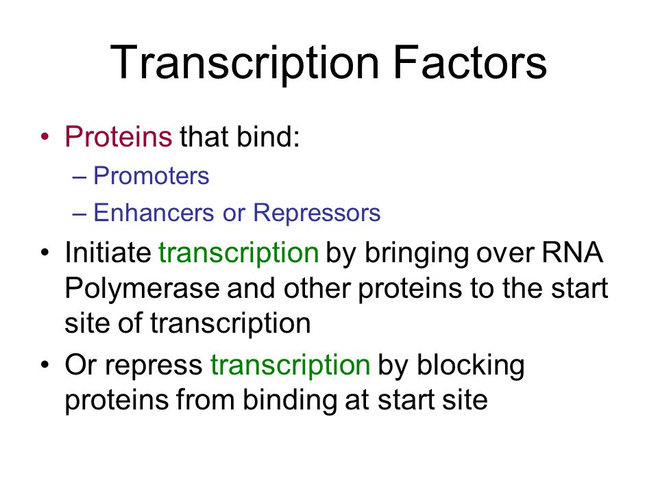 Transcription Factors Proteins that bind: –Promoters –Enhancers or Repressors Initiate transcription by bringing over RNA Polymerase and other proteins to the start site of transcription Or repress transcription by blocking proteins from binding at start site