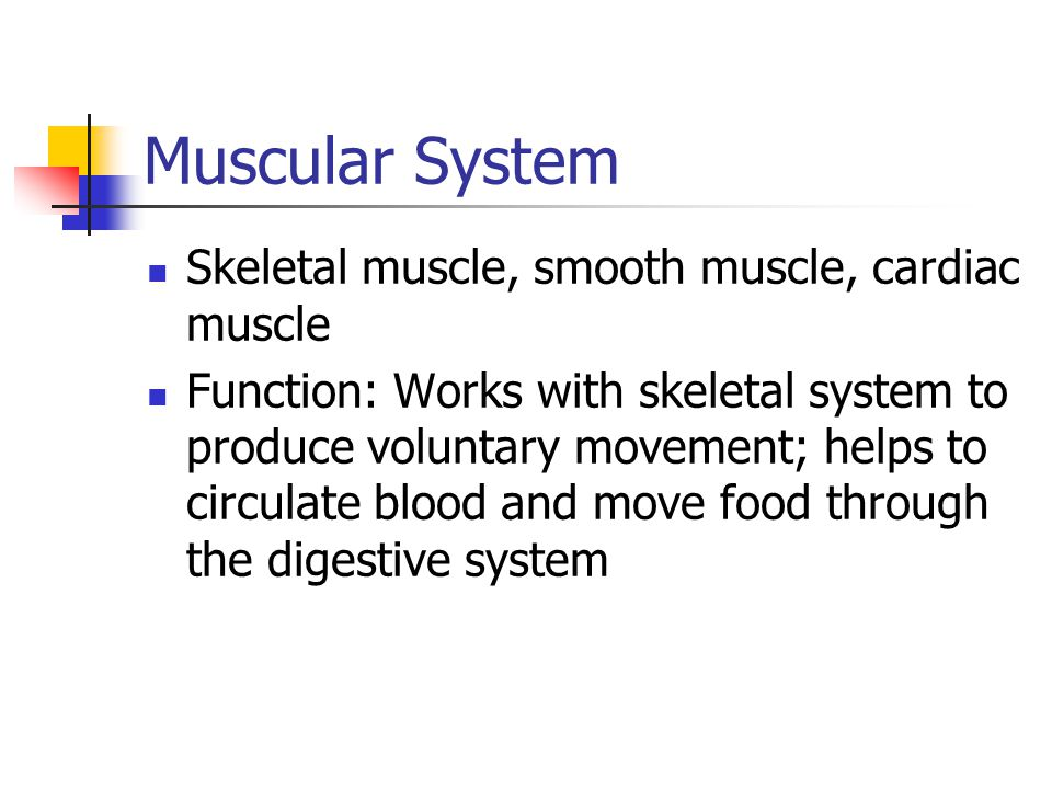 Muscular System Skeletal muscle, smooth muscle, cardiac muscle Function: Works with skeletal system to produce voluntary movement; helps to circulate blood and move food through the digestive system