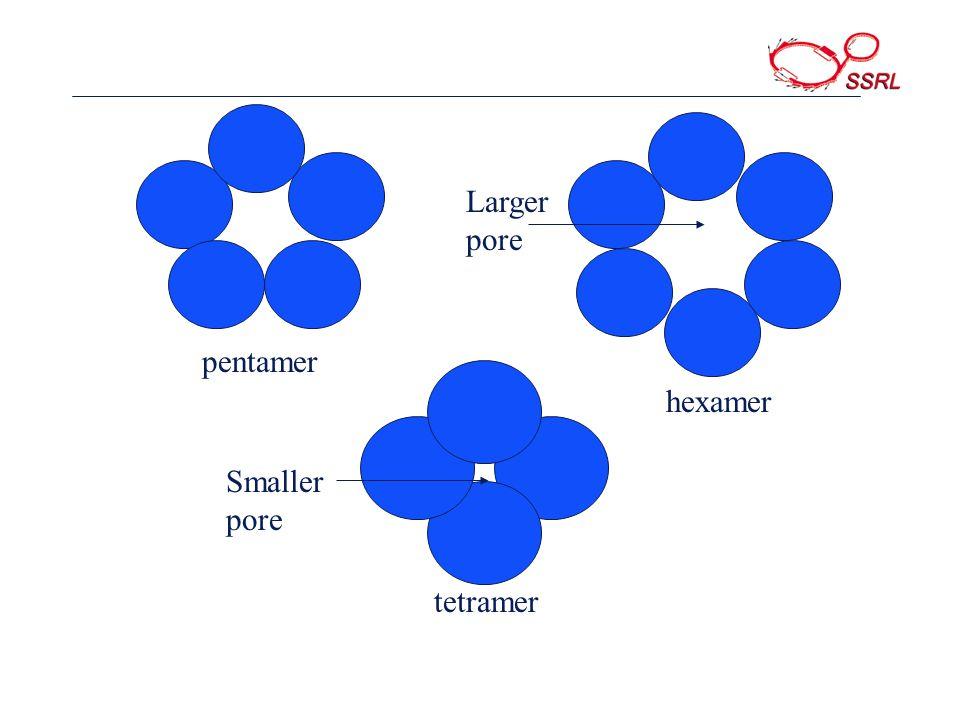 Larger pore Smaller pore pentamer hexamer tetramer