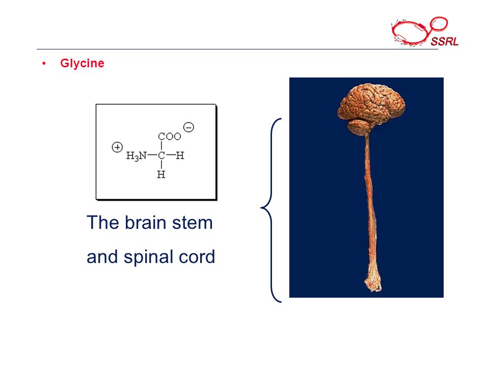 Glycine The brain stem and spinal cord