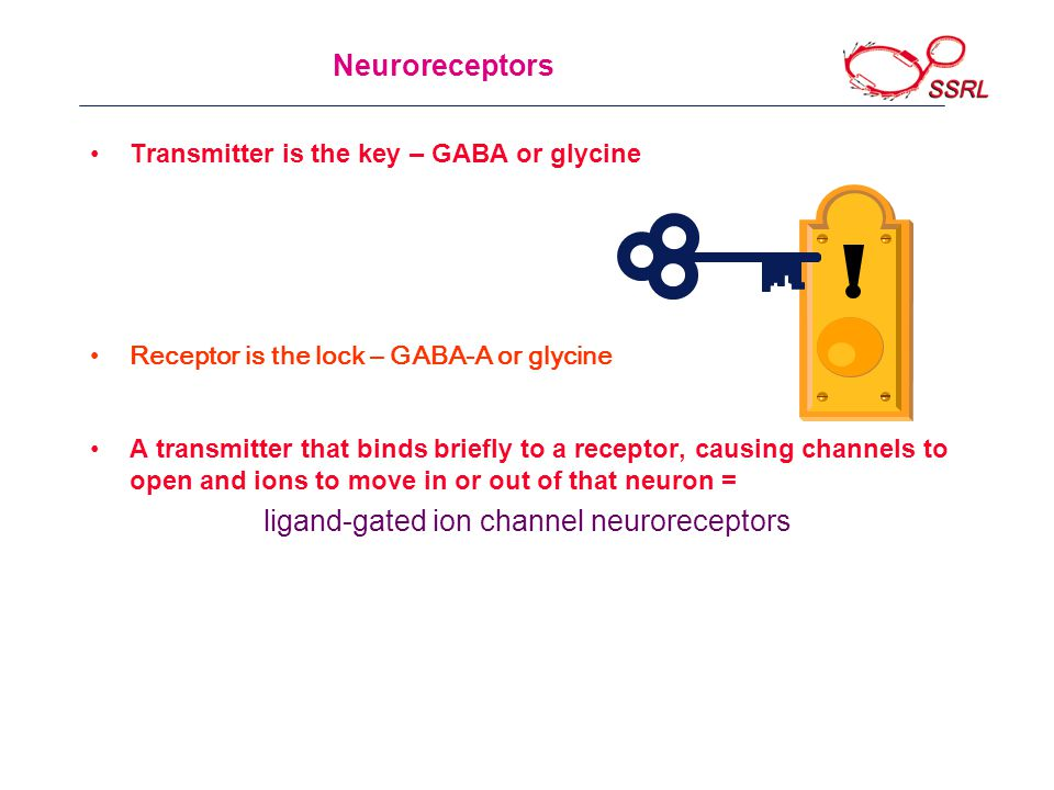 Receptor is the lock – GABA-A or glycine Neuroreceptors Transmitter is the key – GABA or glycine A transmitter that binds briefly to a receptor, causing channels to open and ions to move in or out of that neuron = ligand-gated ion channel neuroreceptors