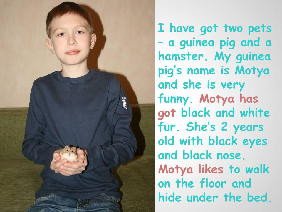 I have got two pets – a guinea pig and a hamster.