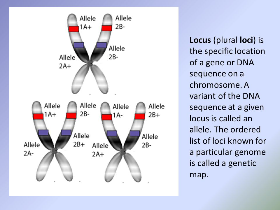Locus (plural loci) is the specific location of a gene or DNA sequence on a chromosome.