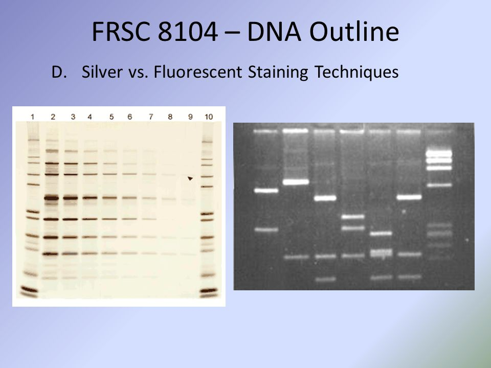 D.Silver vs. Fluorescent Staining Techniques FRSC 8104 – DNA Outline