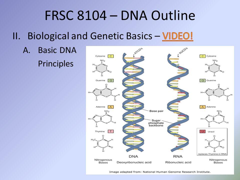 C.Early Based PCR Testing 1.HLA DQ Alpha / DQA1 FRSC 8104 – DNA Outline