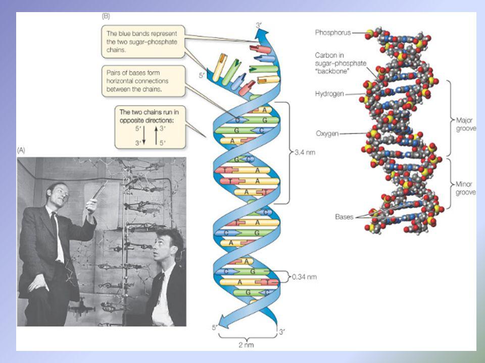 3.D1S80 FRSC 8104 – DNA Outline