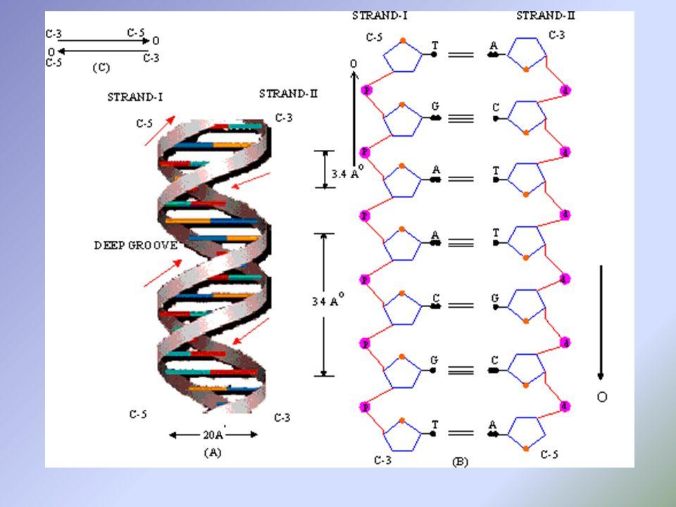 FRSC 8104 – DNA Outline B.Chromosomes, Genes, DNA Markers