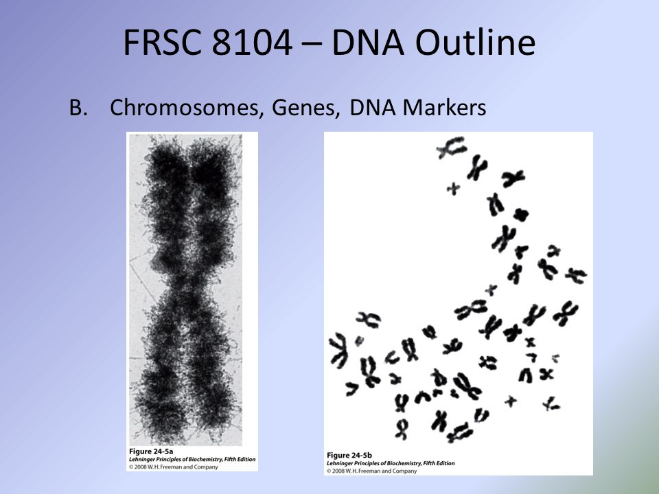 FRSC 8104 – DNA Outline B.Chromosomes, Genes, DNA Markers