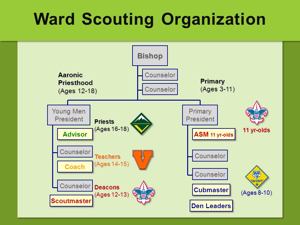 Ward Scouting Organization Counselor Bishop Counselor Counselor Counselor Counselor Counselor Aaronic Priesthood (Ages 12-18) Primary (Ages 3-11) Youn