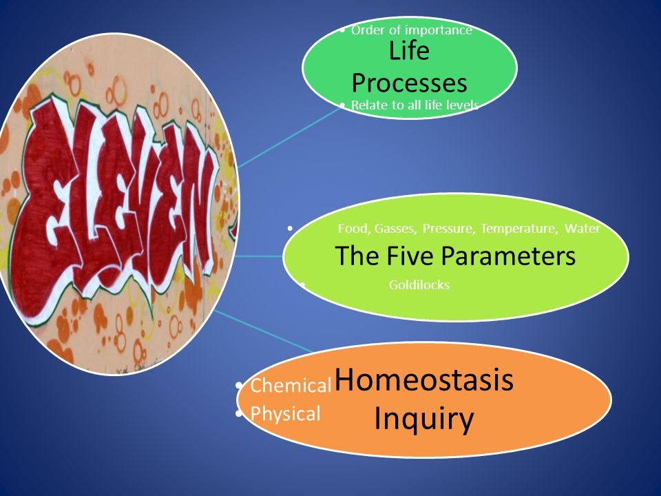 Life Processes Order of importance Relate to all life levels The Five Parameters Food, Gasses, Pressure, Temperature, Water Goldilocks Homeostasis Inq
