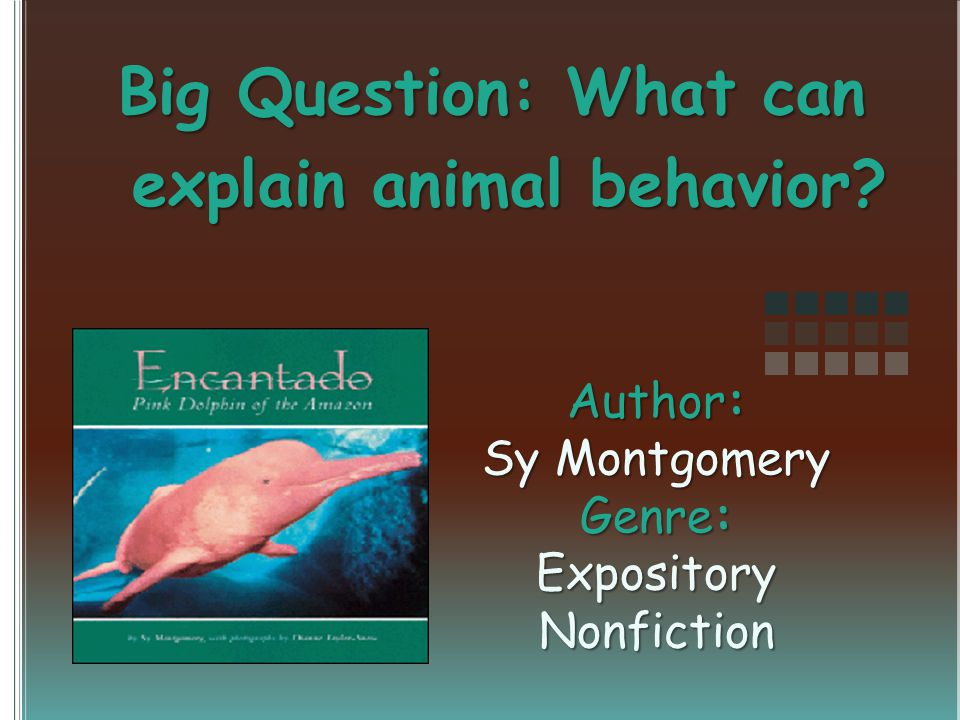 Question of the Day Why do you think a pink dolphin is called encantado or enchanted ?