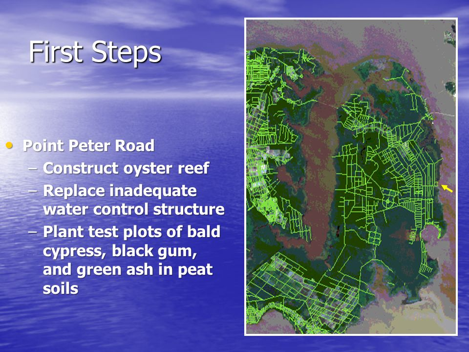 First Steps Point Peter Road Point Peter Road –Construct oyster reef –Replace inadequate water control structure –Plant test plots of bald cypress, black gum, and green ash in peat soils