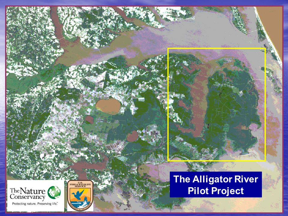 The Alligator River Pilot Project