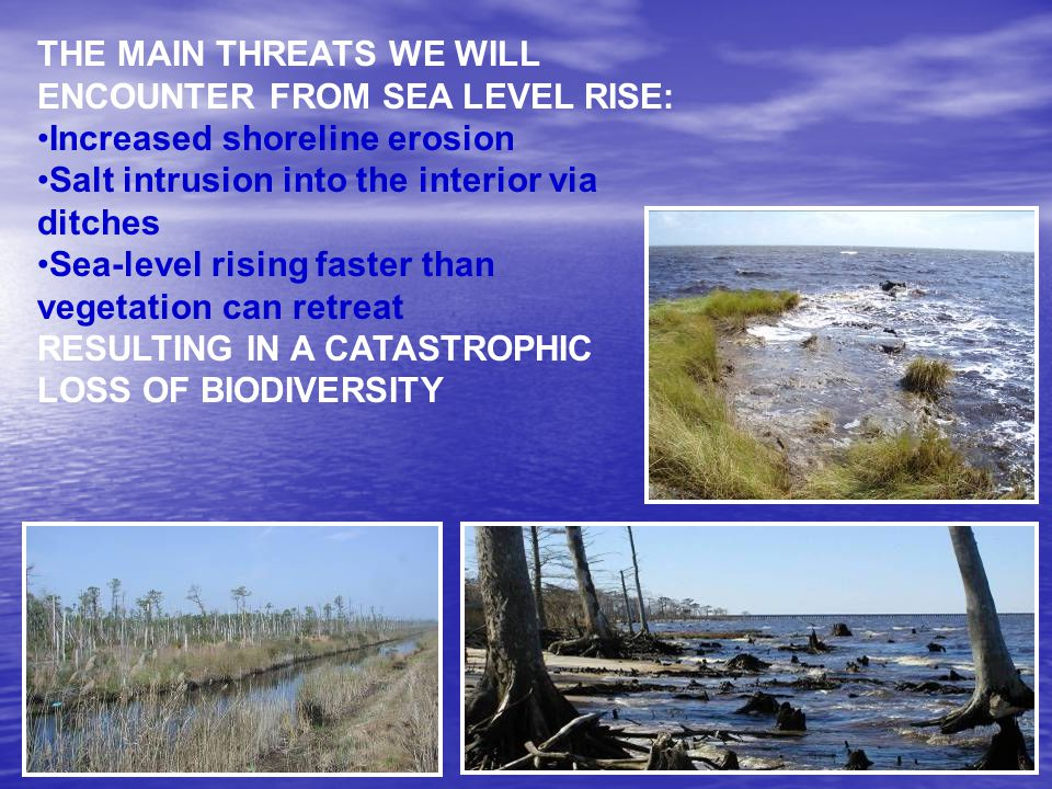 THE MAIN THREATS WE WILL ENCOUNTER FROM SEA LEVEL RISE: Increased shoreline erosion Salt intrusion into the interior via ditches Sea-level rising faster than vegetation can retreat RESULTING IN A CATASTROPHIC LOSS OF BIODIVERSITY