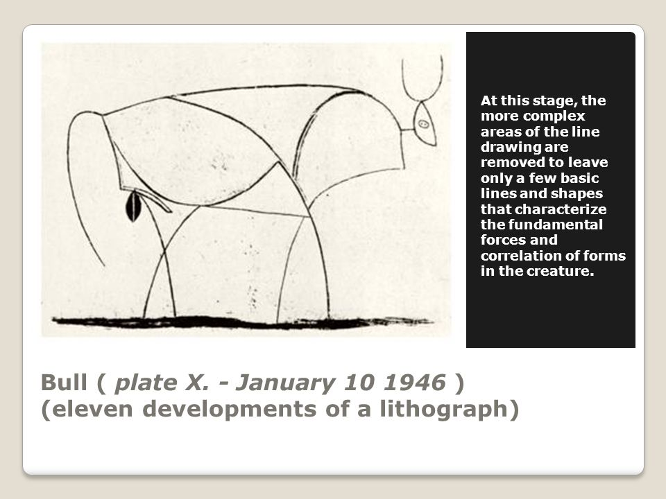 Bull ( plate X. - January 10 1946 ) (eleven developments of a lithograph) At this stage, the more complex areas of the line drawing are removed to lea