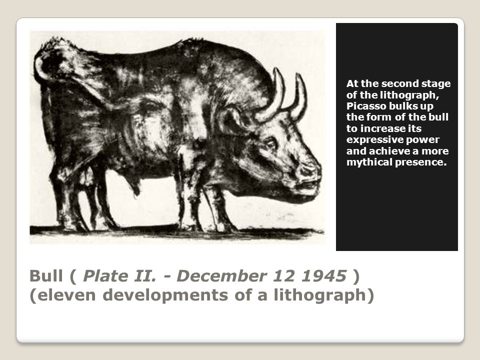 Bull ( Plate III.- December 18 1945 ) (eleven developments of a lithograph) On Plate III.