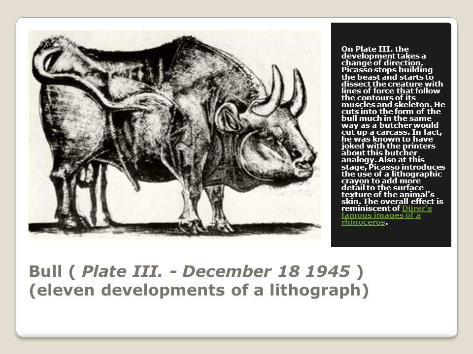 Bull ( Plate III. - December 18 1945 ) (eleven developments of a lithograph) On Plate III.