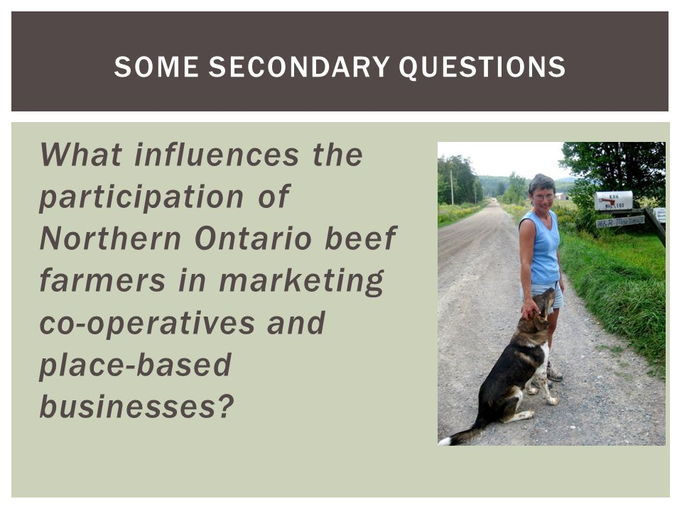 What influences the participation of Northern Ontario beef farmers in marketing co-operatives and place-based businesses? SOME SECONDARY QUESTIONS