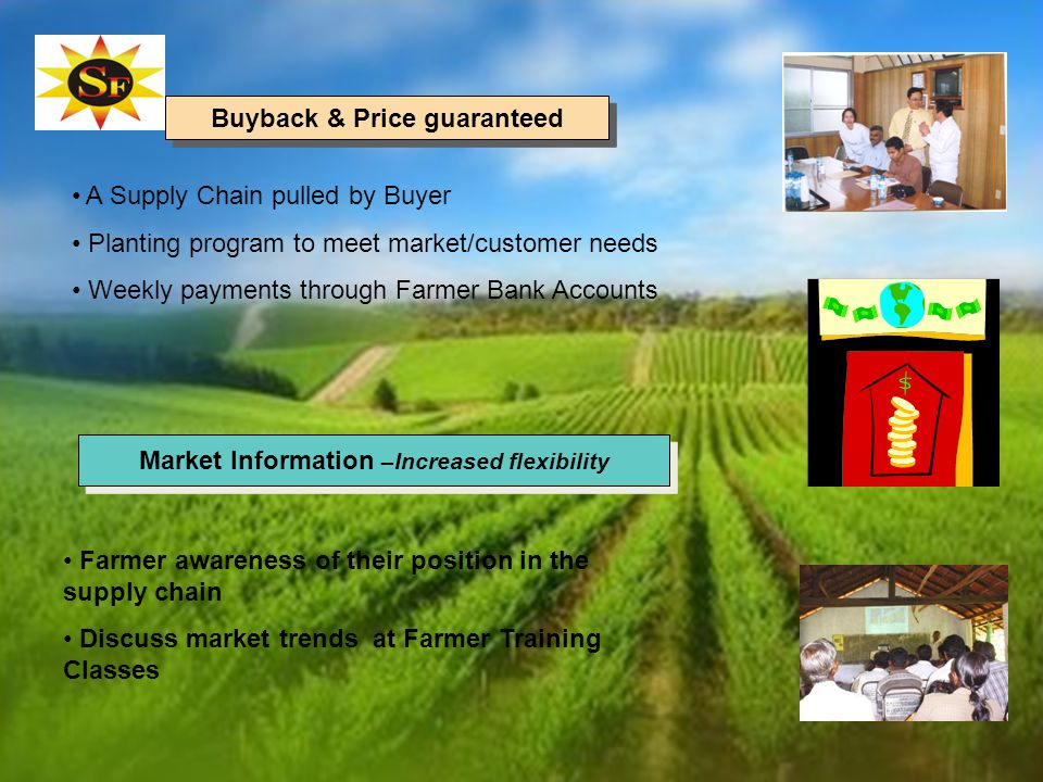 A Supply Chain pulled by Buyer Planting program to meet market/customer needs Weekly payments through Farmer Bank Accounts Farmer awareness of their position in the supply chain Discuss market trends at Farmer Training Classes Buyback & Price guaranteed Market Information –Increased flexibility