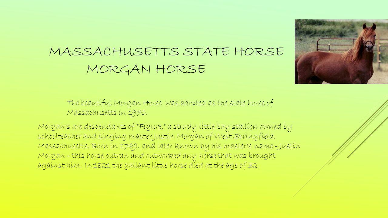 MASSACHUSETTS STATE HORSE MORGAN HORSE The beautiful Morgan Horse was adopted as the state horse of Massachusetts in 1970.