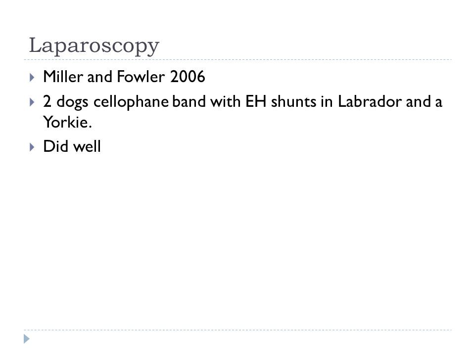 Laparoscopy  Miller and Fowler 2006  2 dogs cellophane band with EH shunts in Labrador and a Yorkie.