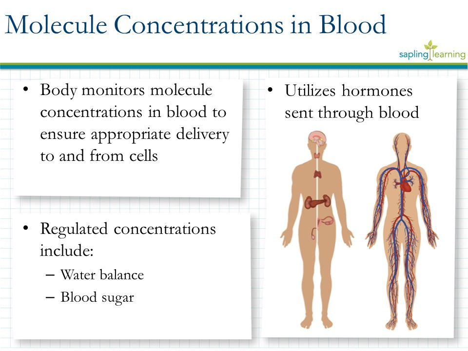 Body monitors molecule concentrations in blood to ensure appropriate delivery to and from cells Regulated concentrations include: – Water balance – Bl