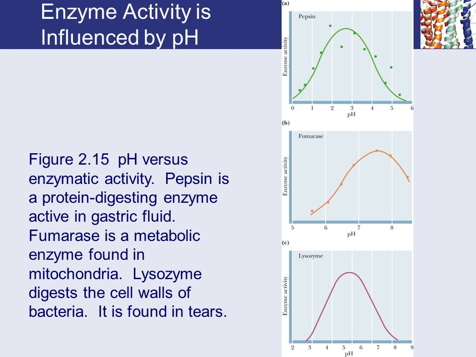 Enzyme Activity is Influenced by pH Figure 2.15 pH versus enzymatic activity.