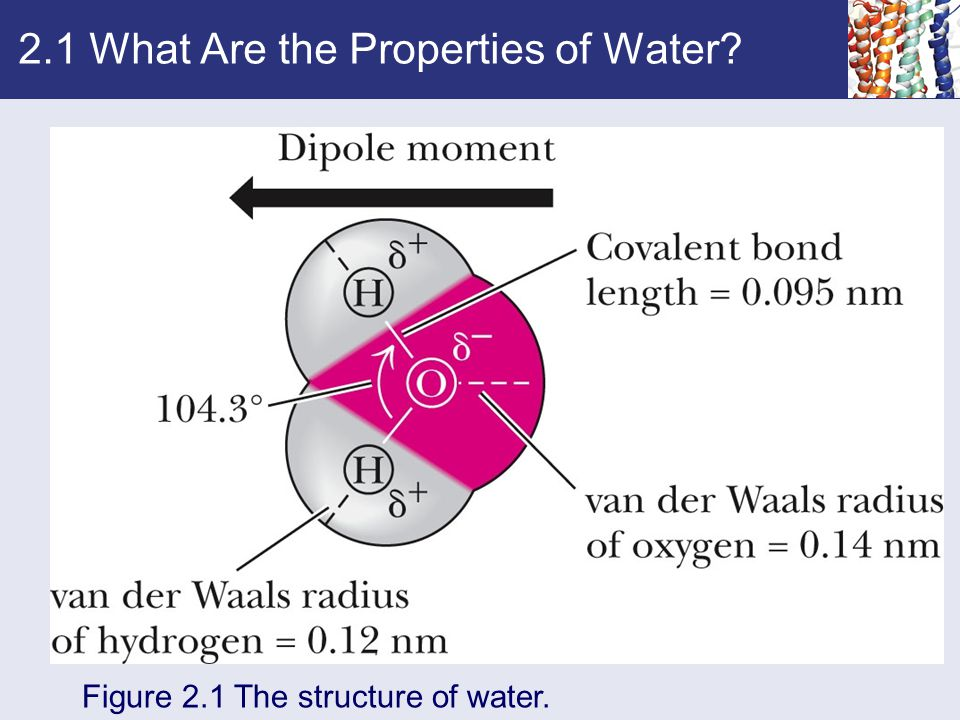 2.1 What Are the Properties of Water Figure 2.1 The structure of water.
