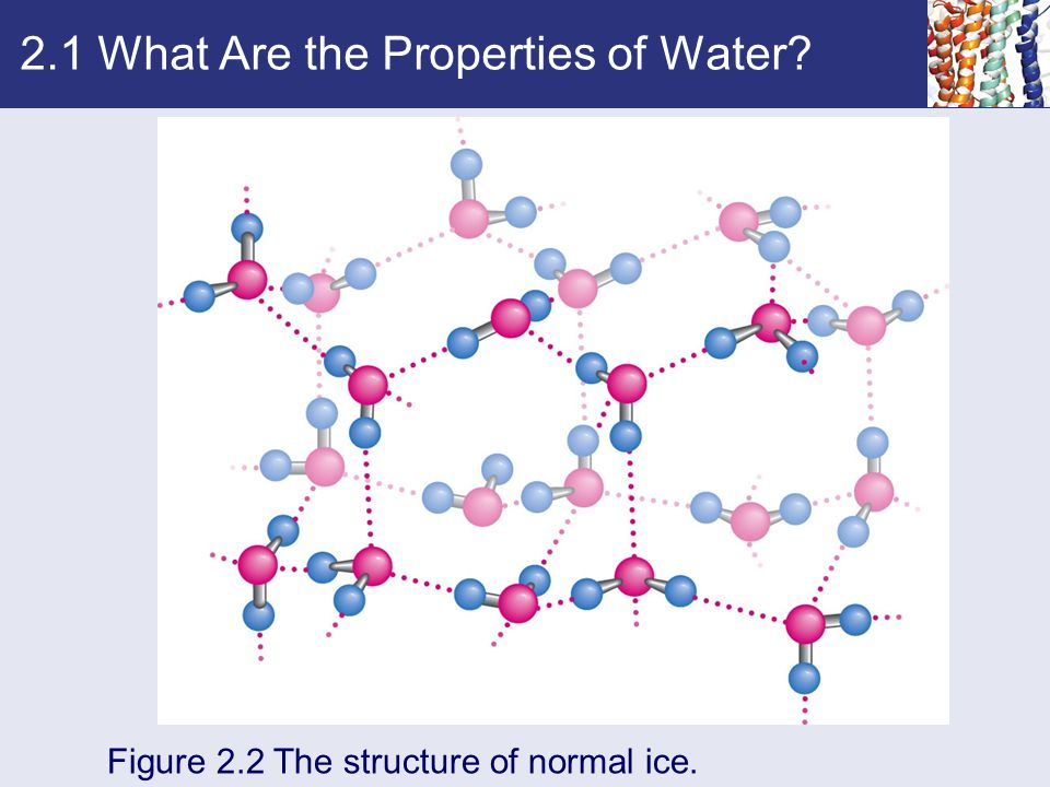 2.1 What Are the Properties of Water? Figure 2.2 The structure of normal ice.
