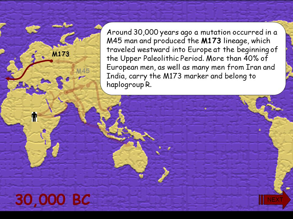 30,000 BC M173 M45 Around 30,000 years ago a mutation occurred in a M45 man and produced the M173 lineage, which traveled westward into Europe at the beginning of the Upper Paleolithic Period.