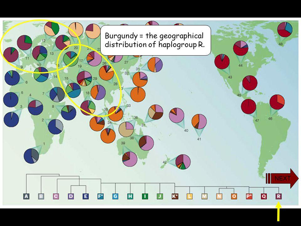 yDNA Haplogroup R