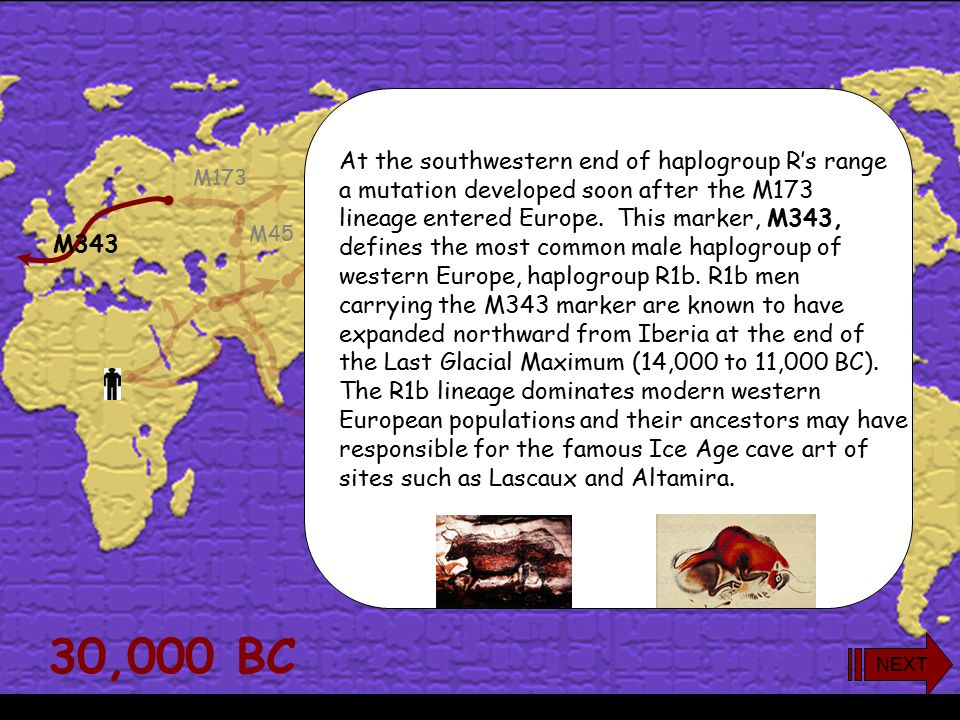 M60 M91 M130 M96 M201 M168 M52 M89 M170M304 M9 M45 M173 During the early Upper Paleolithic members of haplogroup R settled throughout Europe, from Ukr