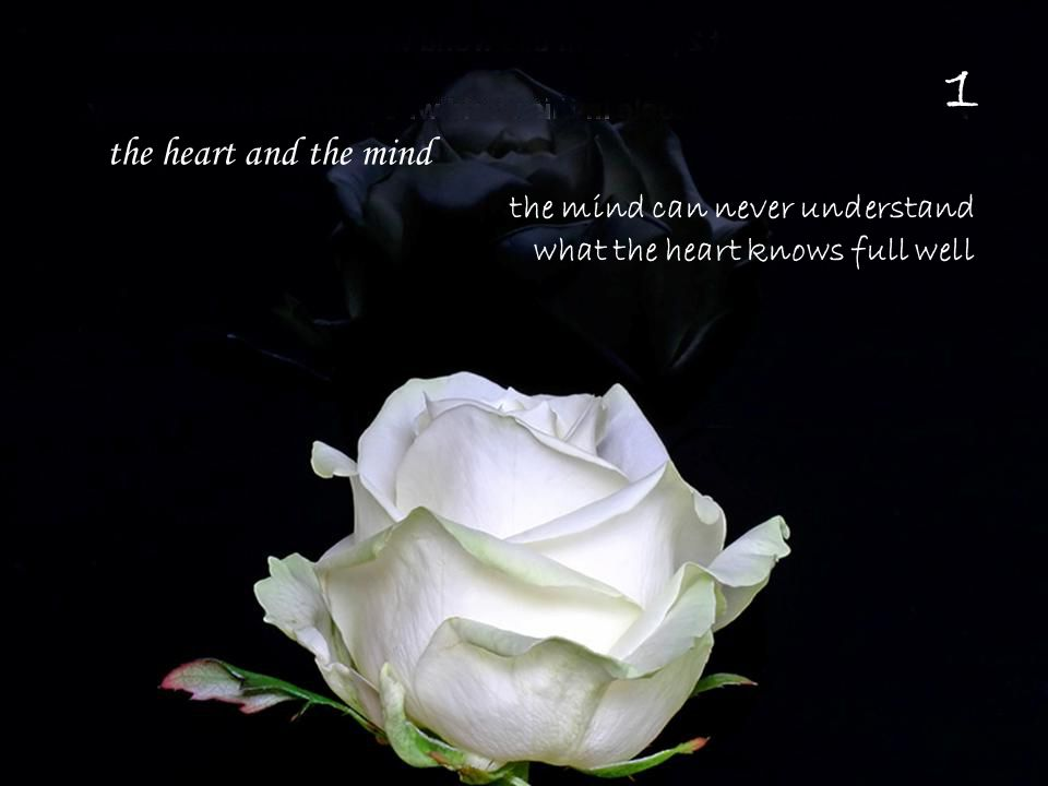 the mind can never understand what the heart knows full well the heart and the mind 1