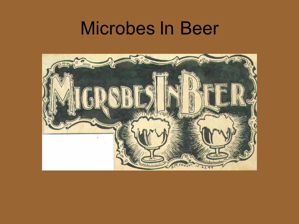 Microbes In Beer